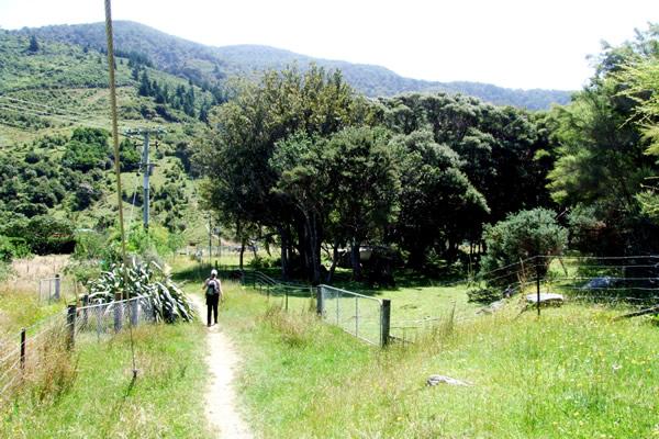Point 8 - Walking over lovely farmland - Copyright Freewalks.nz