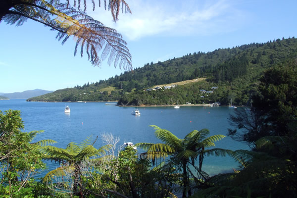 Point 10 - Halfway between Furneaux Lodge and Camp Bay - Copyright Freewalks.nz