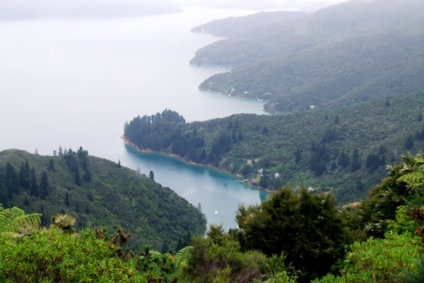 Queen Charlotte Track - Point 16 - Beautiful views out to sea - Copyright Freewalks.nz