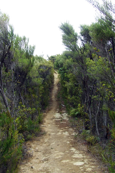 Queen Charlotte Track - Point 19 - Walking down to Bay of Many Coves - Copyright Freewalks.nz