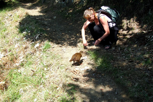 Point 3 - Meeting a very friendly Weka