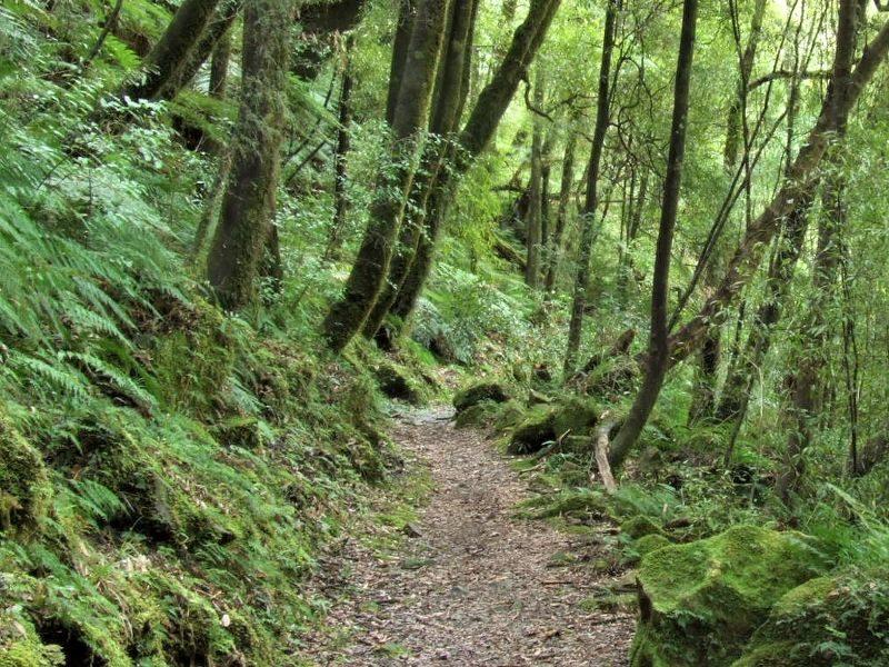 Waiotemarama walks, North Island, New Zealand-4