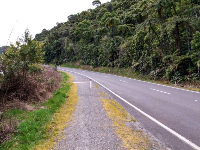 The busy road on the Blue Lake walk from Rotorua
