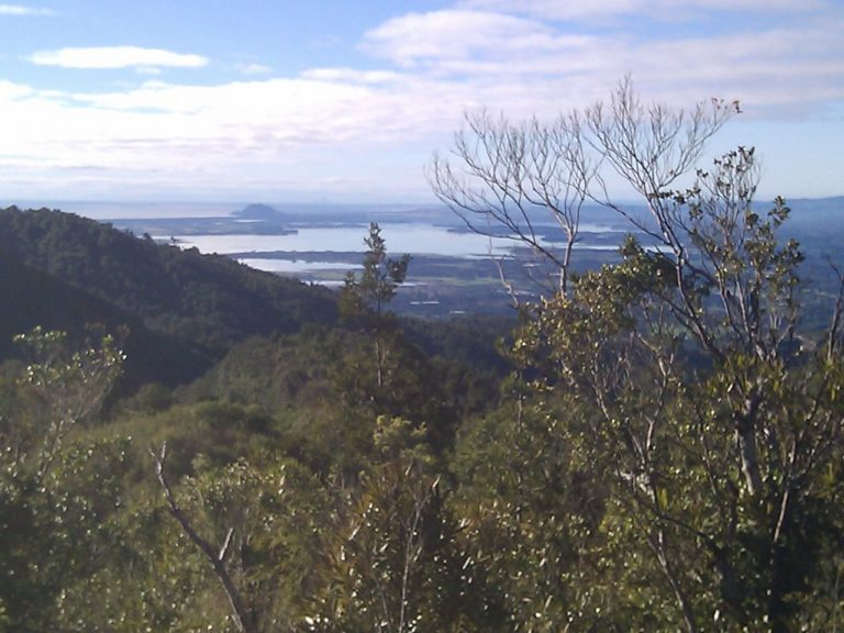 Looking Out To Tauranga