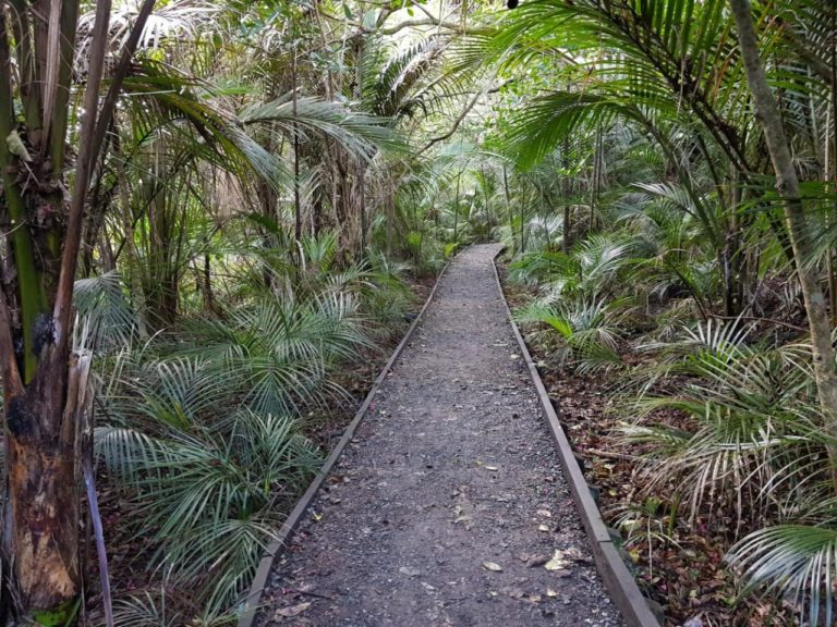Nature walk at Long Bay Regional Park in Auckland