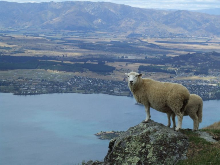 More views from the summit of Roys Peak