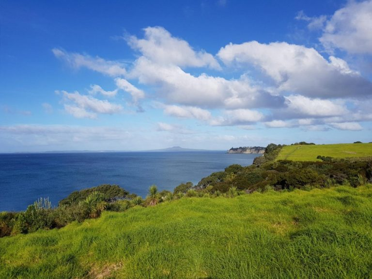 Lovely views at the start of the Long Bay Regional Park coastal track