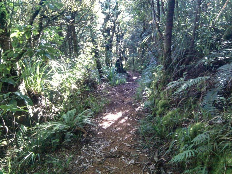 Waiorongomai Track