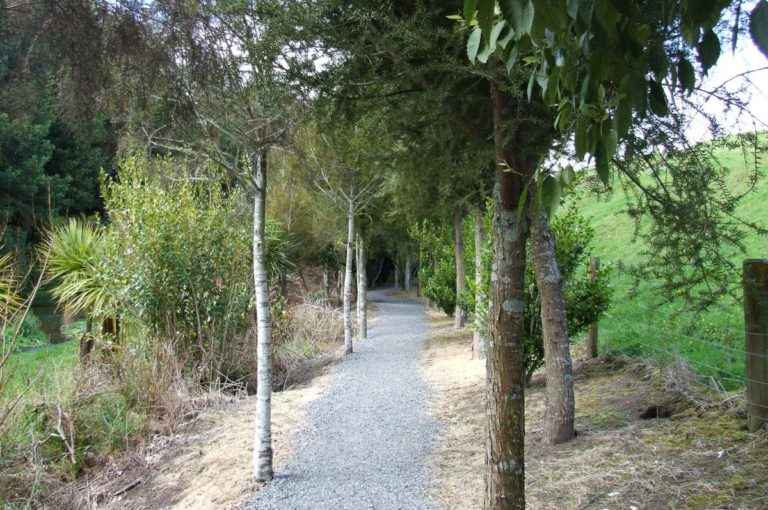 Excellent track quality along the Blue Springs, Waihou River Walk