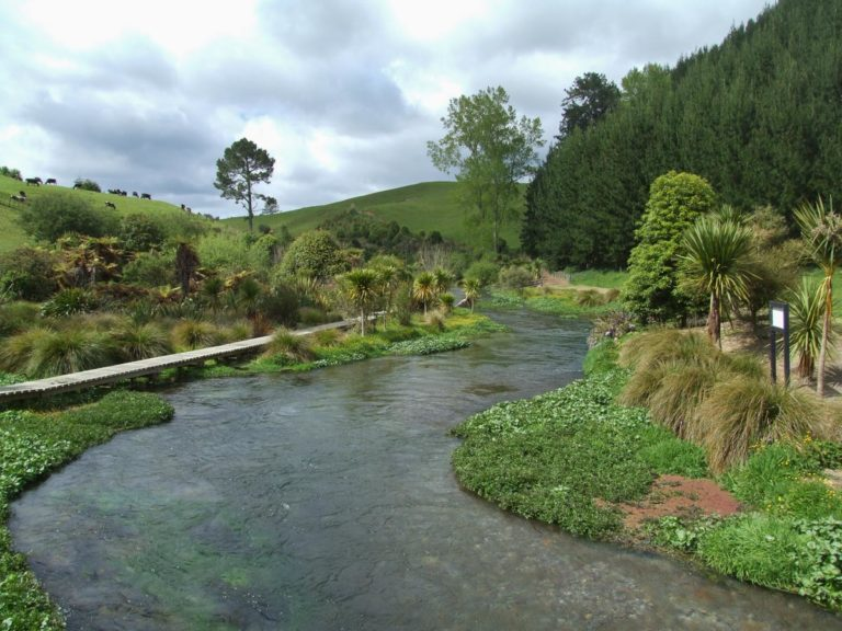 Enjoy the stunning views of the clear water on your way to the Blue Springs, Waihou River Walk