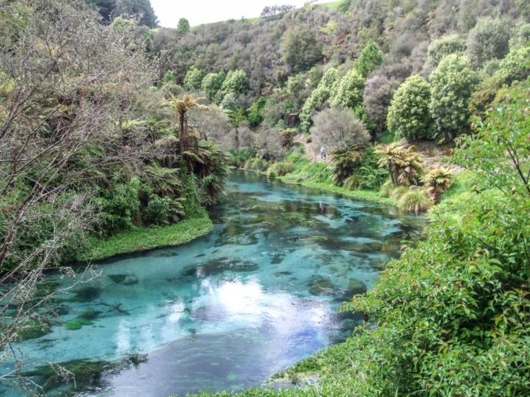 Look for trout along the way to the Blue Springs, Te Waihou River Walk