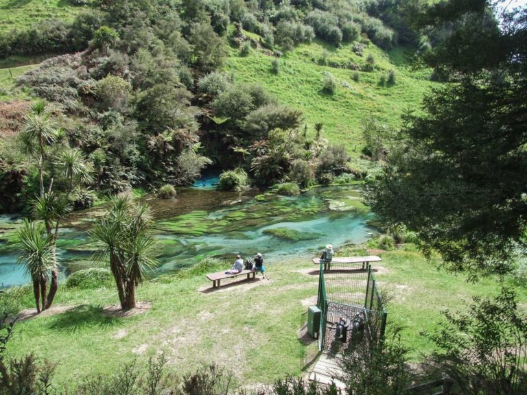The end of the Blue Springs, Waihou River Walk
