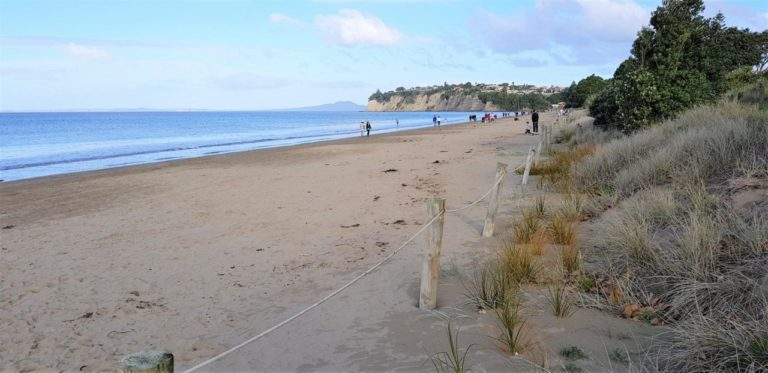 The beach at Long Bay Regional Park in Auckland