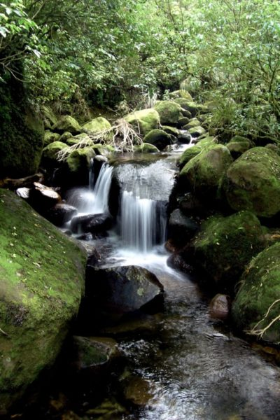 Very pretty small waterfalls on the Wairere Falls Walk