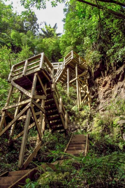 Looking up at the staircase to Wairere Falls Walk