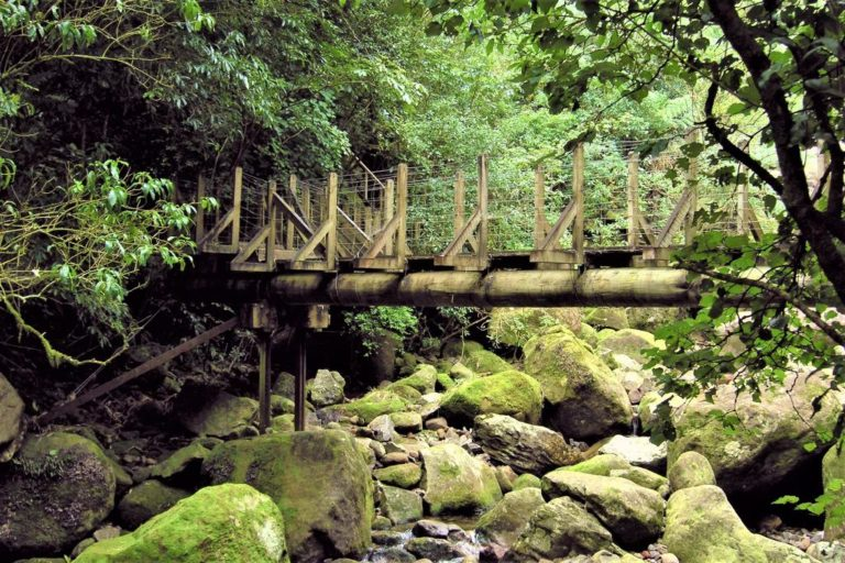 First bridge on the Wairere Falls Walk