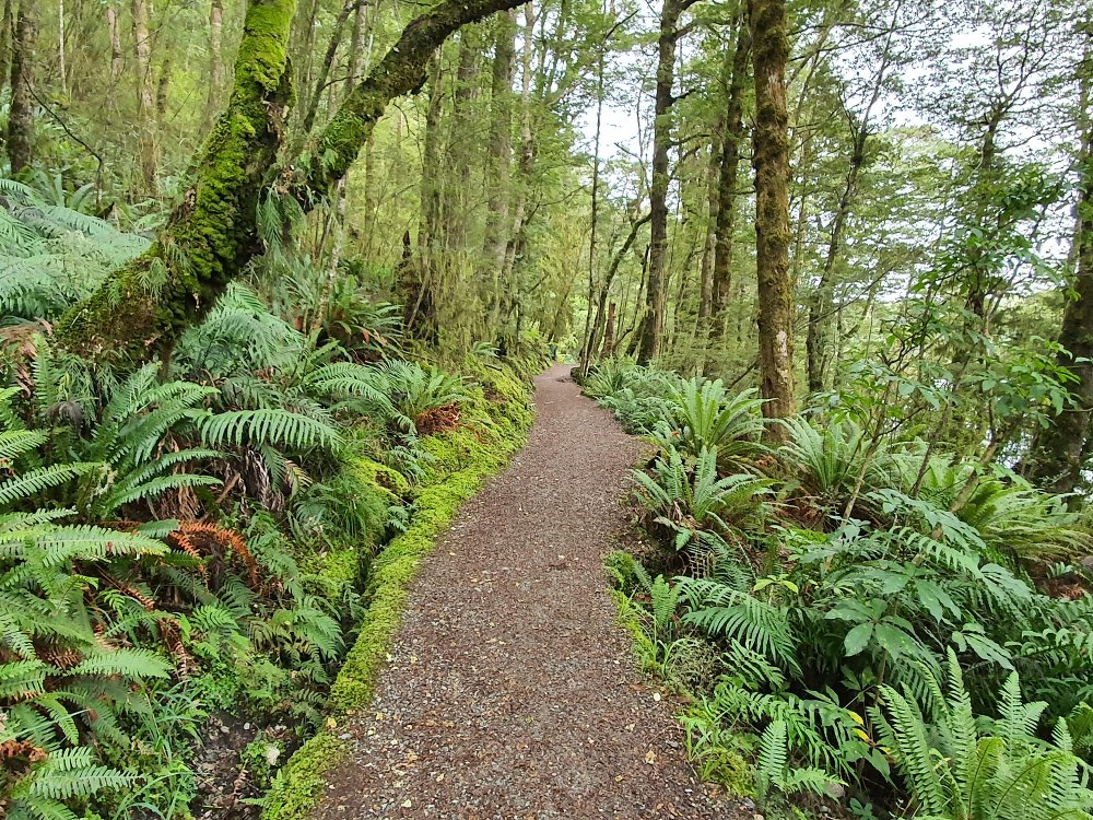 Free Lake Howden Walk in Milford Sound - South Island - New Zealand - View of the bush track