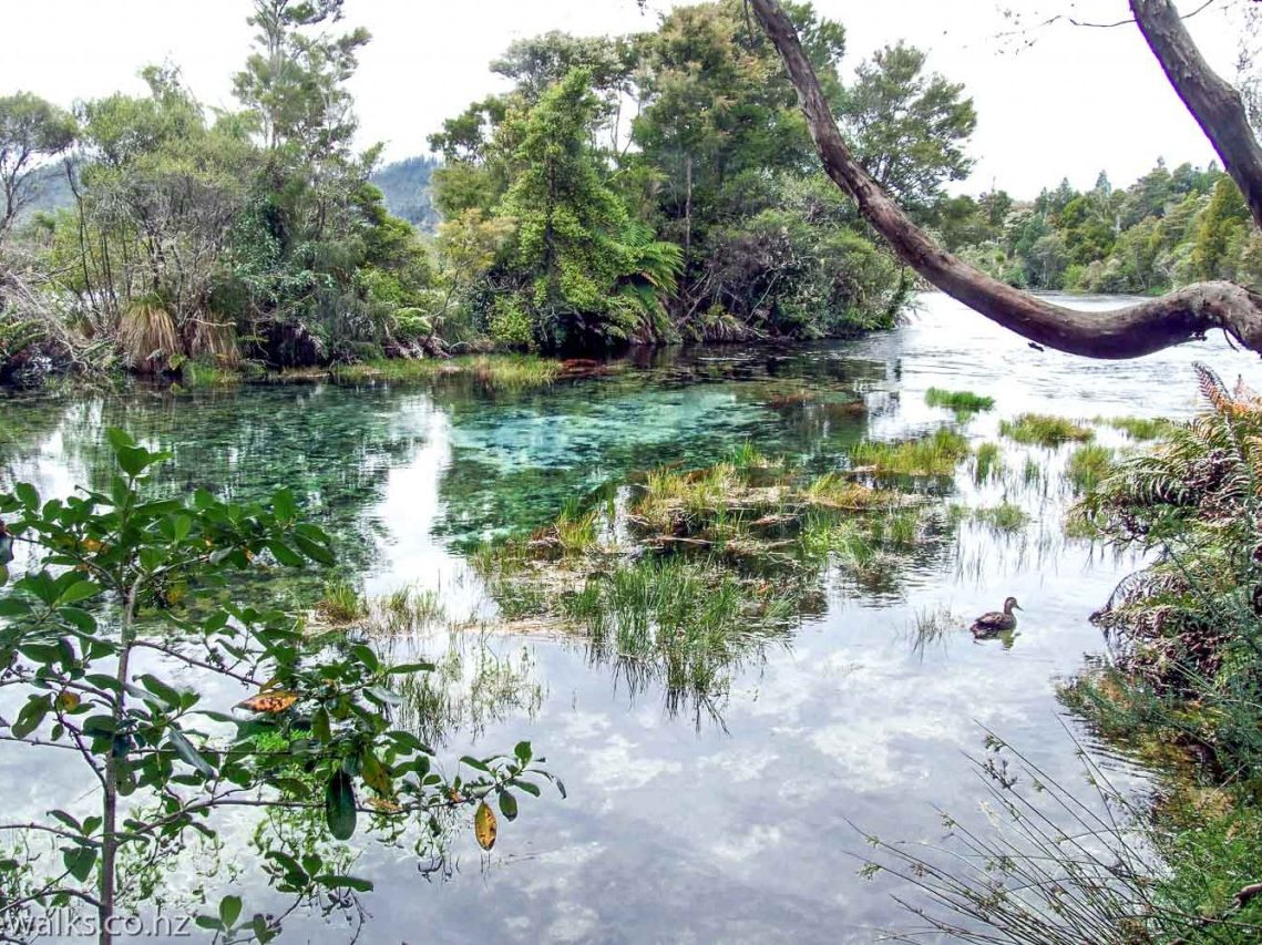 Pupu Springs walk in the Takaka region - South Island - New Zealand - Looking over the crystal clear water - Copyright Freewalks.nz