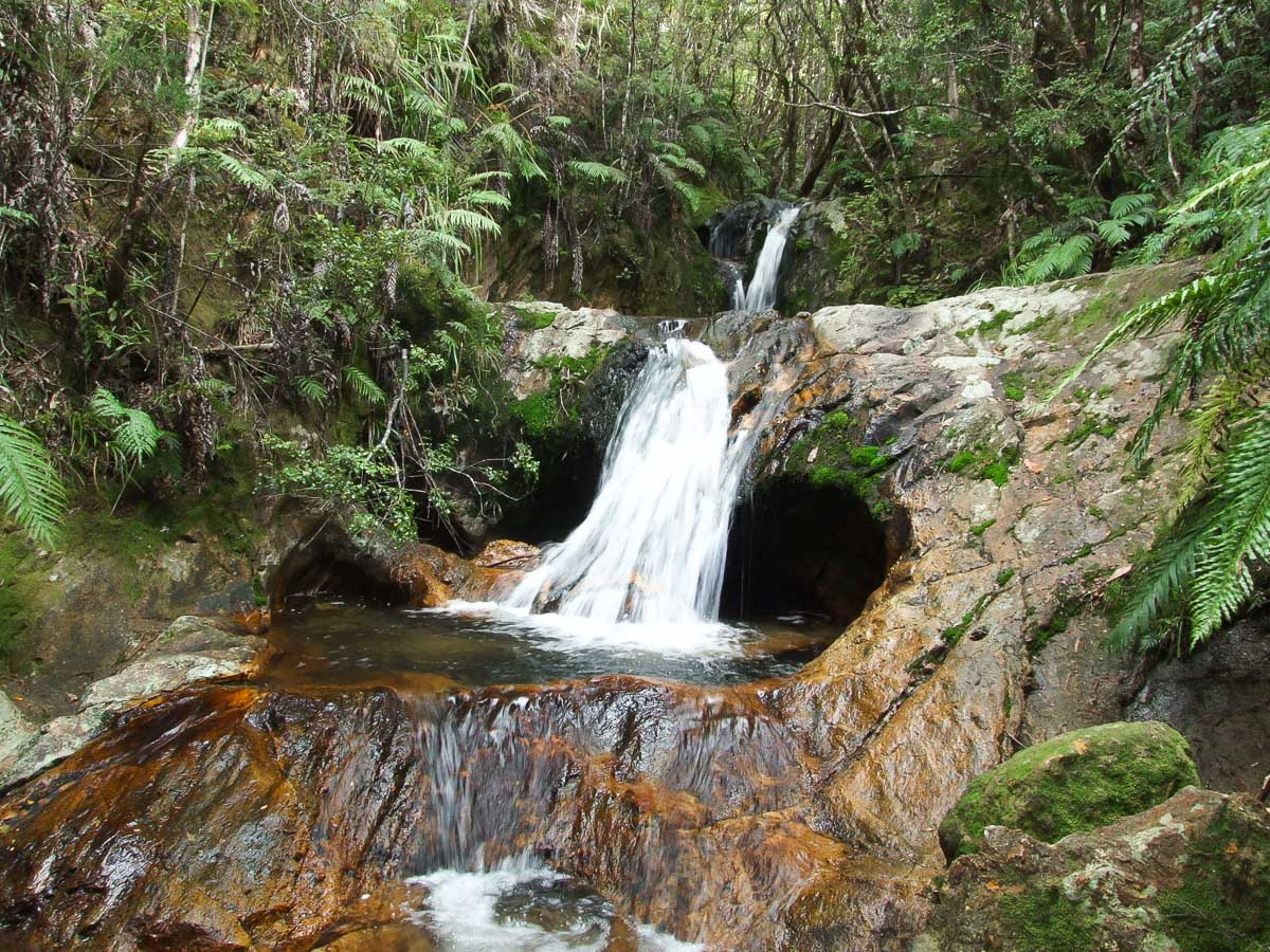 Hikes and walks in Thames, North Island - Copyright Freewalks.nz - View on the Water Race walk